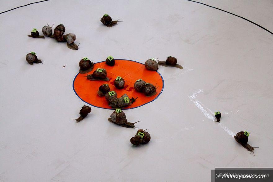 REGION, Walim: VI Wyścig Ślimaków w Walimiu