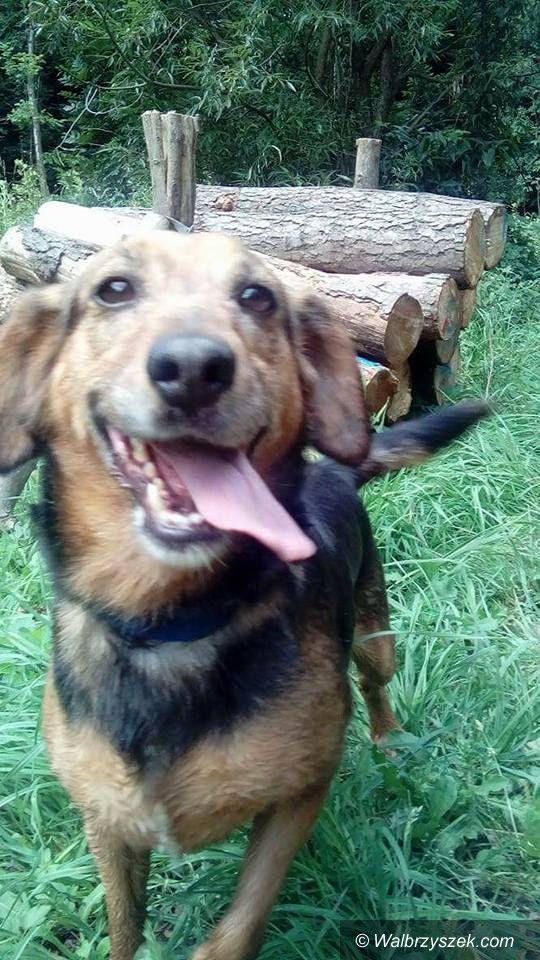 Wałbrzych: Sońka to trudny pies, ale też zasługuje na szczęśliwy dom