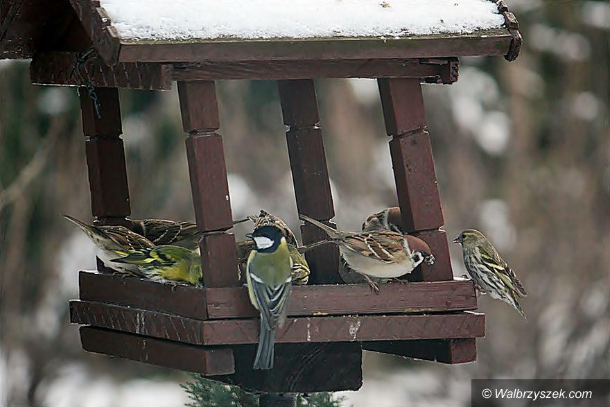 Wałbrzych: Zimowe dokarmianie ptaków