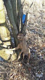 Wałbrzych: Zwyrodnialca, który przywiązał psa do drzewa w rejonie ul. Łokietka wciąż szuka policja