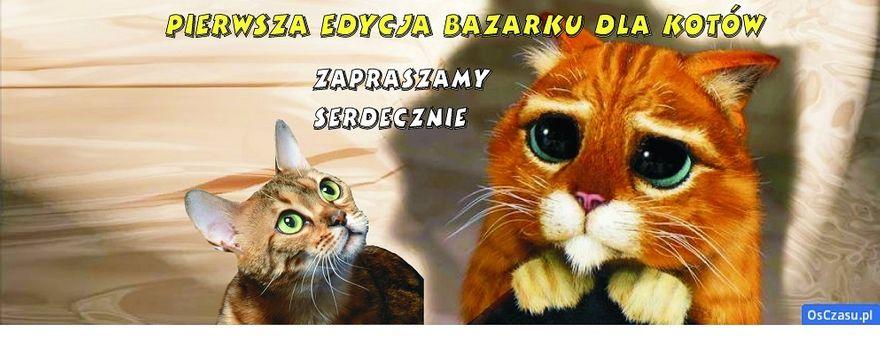 Wałbrzych: Coś dla miłośników kotów