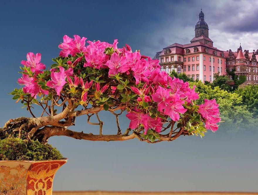 Wałbrzych: Narodowa Wystawa Bonsai podczas Festiwalu Kwiatów i Sztuki