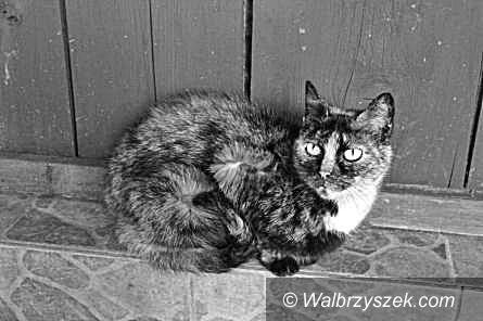 Wałbrzych: Za morderstwo kotów pójdzie do więzienia