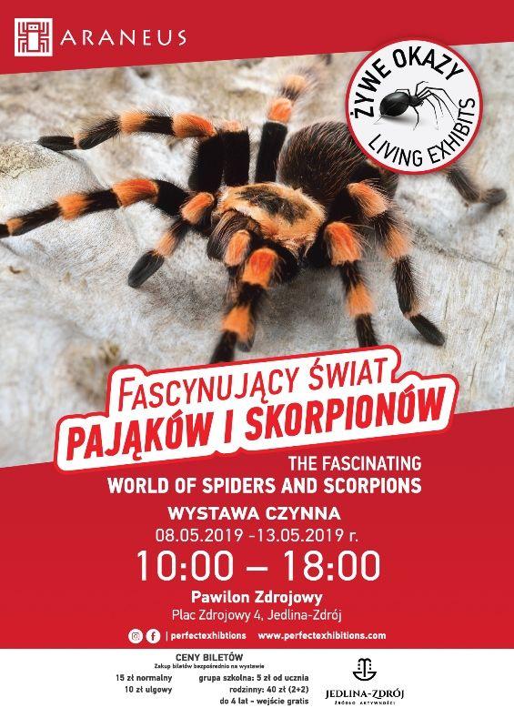REGION, Jedlina-Zdrój: Miłośnicy pająków mają okazję obejrzeć ciekawą wystawę