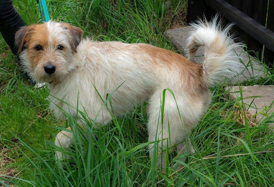 REGION: Kolejny pies czeka na adopcję