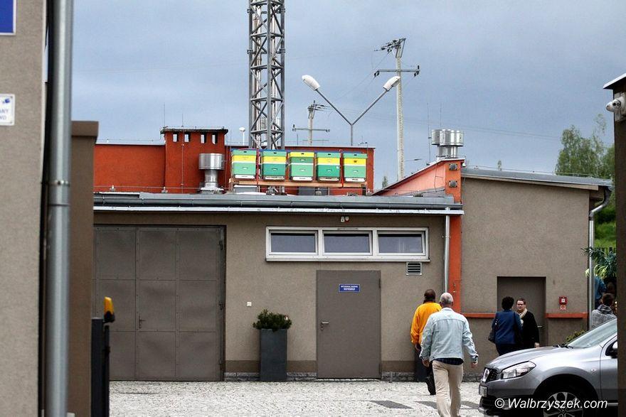 Wałbrzych: Ule Szaniawskiego już funkcjonują
