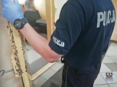 Wałbrzych: 17–latek ukradł ze sklepu 54 tabliczki czekolady