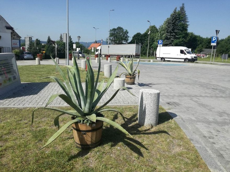 REGION, Szczawno-Zdrój: Tropikalnie na szczawieńskim deptaku