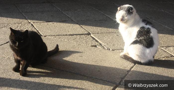 Wałbrzych: Zabijają koty