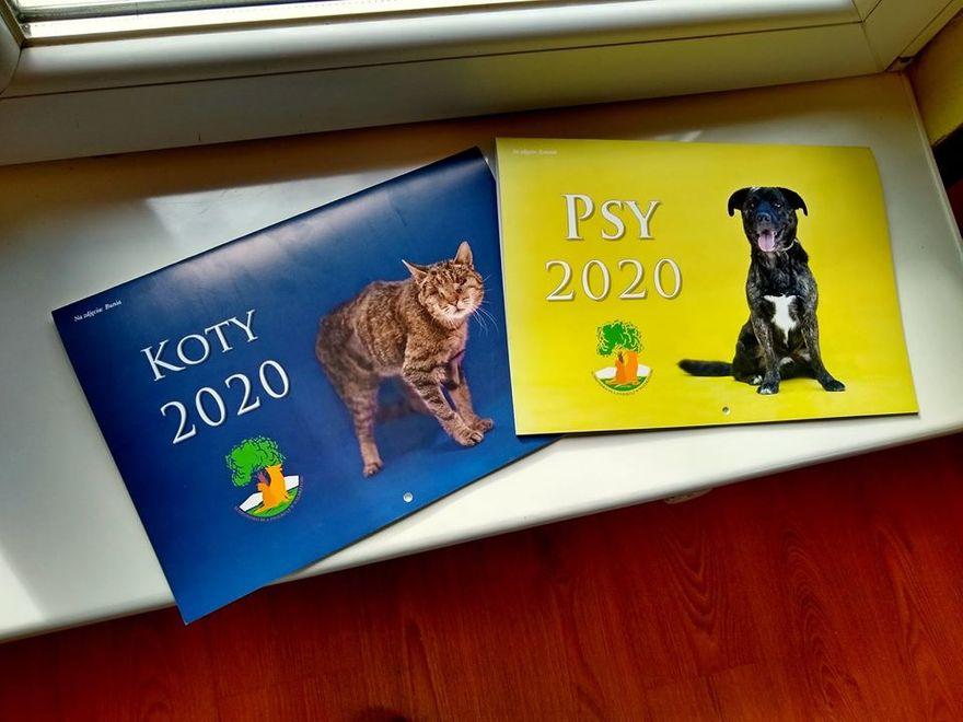 Wałbrzych: Zwierzęce kalendarze