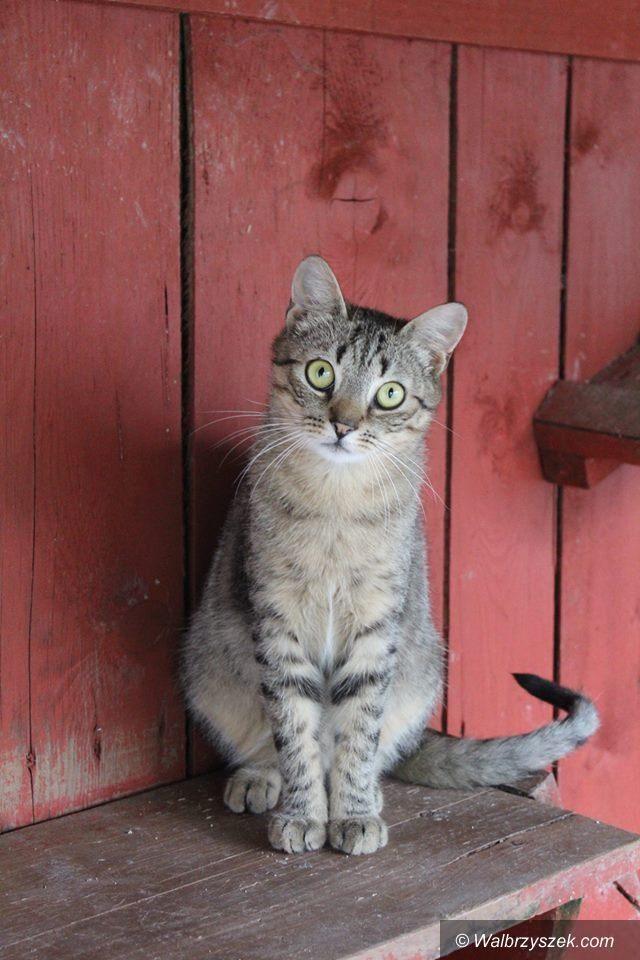REGION, Szczawno-Zdrój: Pomagają kotom