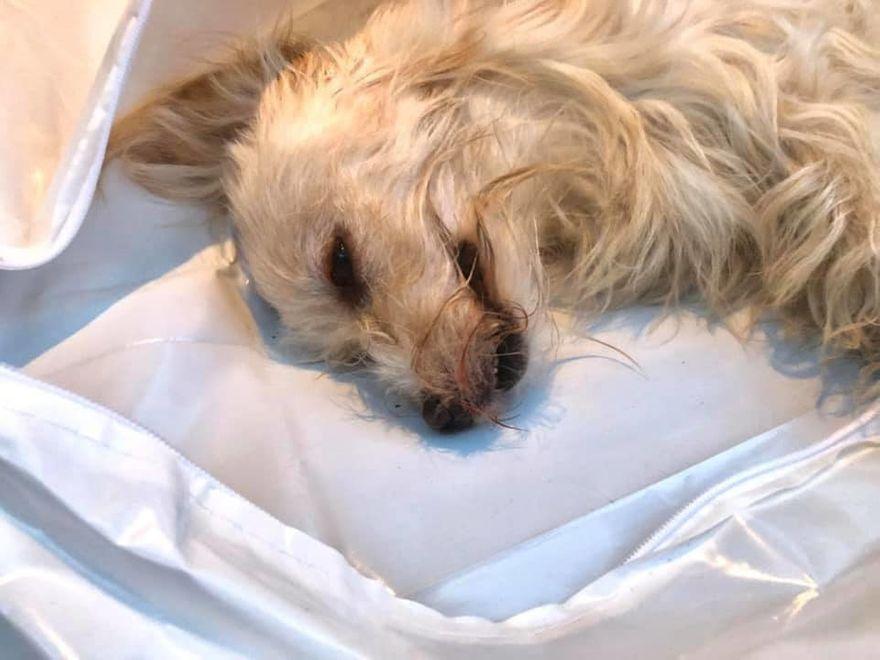 Wałbrzych: Wyrok za morderstwo psa