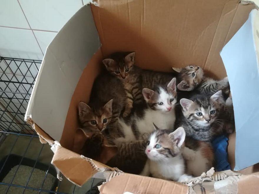 Wałbrzych: Porzucone kocięta