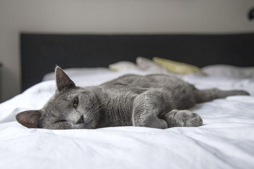 Wałbrzych/Kraj: Ubezpieczenie kota w domu i mieszkaniu – ile kosztuje?