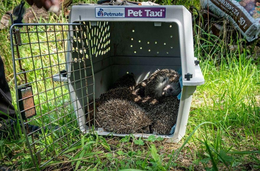 powiat wałbrzyski: Możemy pomóc zwierzętom