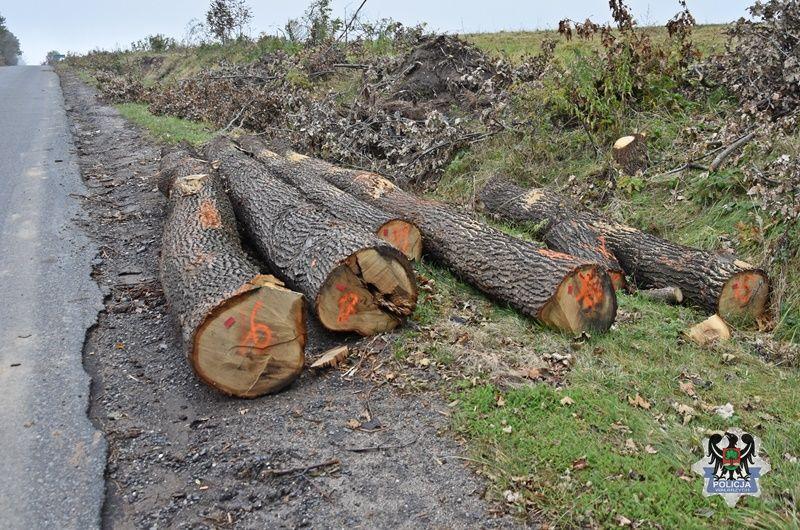 Wałbrzych: Brakowało 10 drzew