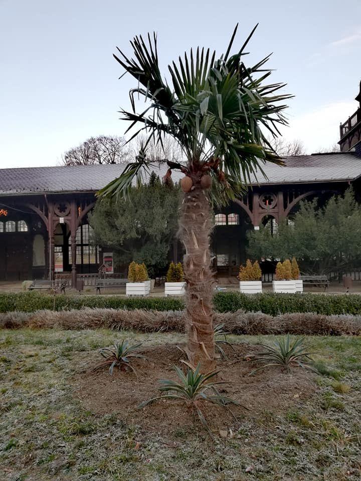 REGION, Szczawno-Zdrój: Palmy i nie tylko