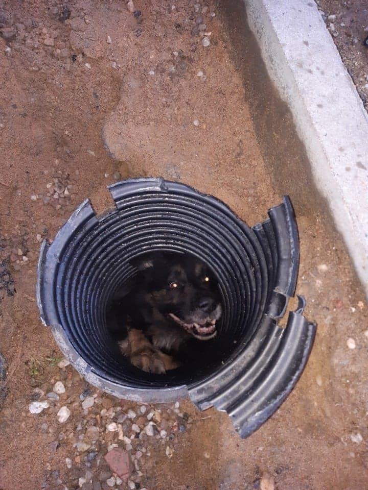 REGION, Boguszów-Gorce: Pies w studzience