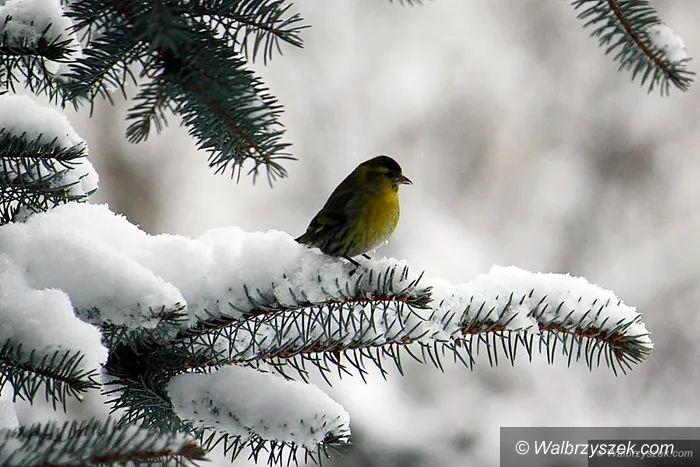Wałbrzych/REGION: Nadeszła zima