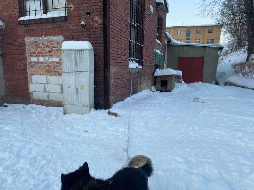Wałbrzych/REGION: Męczone zwierzęta