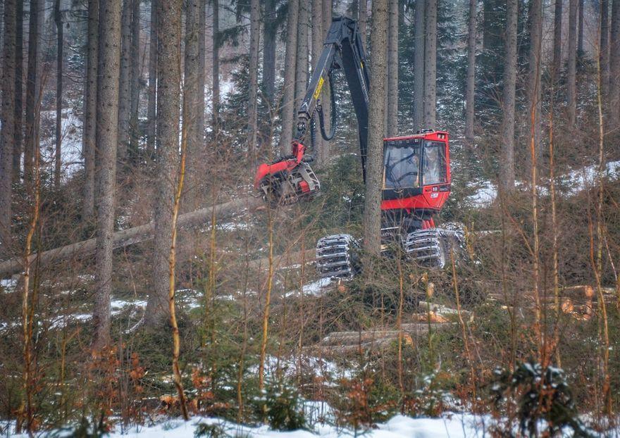 Wałbrzych/REGION: Ostrożnie w lesie