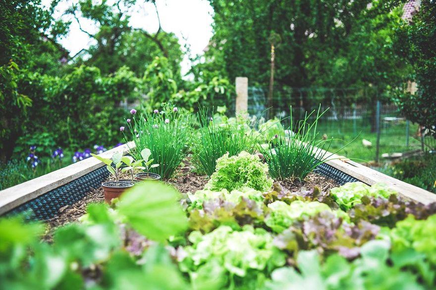 Wałbrzych/Kraj: Pozytywny wpływ uprawiania ogrodu na zdrowie osób starszych
