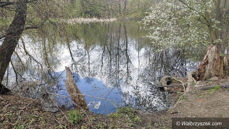 Wałbrzych: Śmieci zmorą przyrody