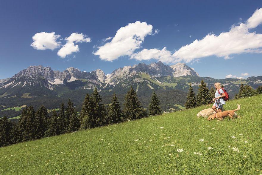 Wałbrzych/REGION: W góry z psem