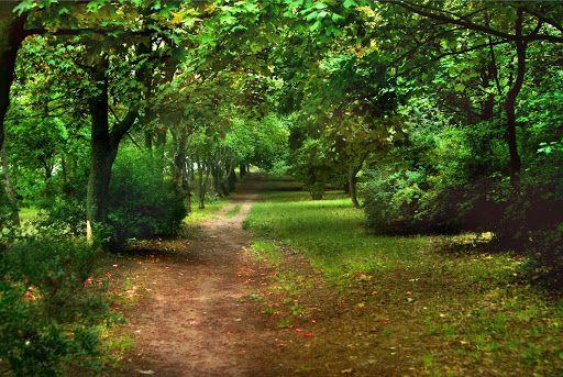 Wałbrzych: Park kieszonkowy na Drzymały