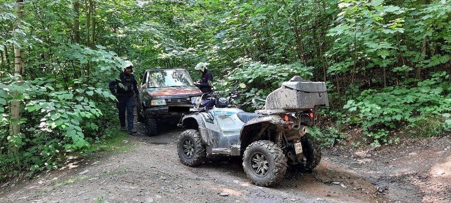 Wałbrzych/REGION: Leśni szkodnicy