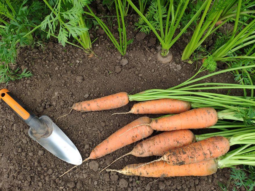 Wałbrzych/Kraj: Co warto wiedzieć o własnej uprawie warzyw?