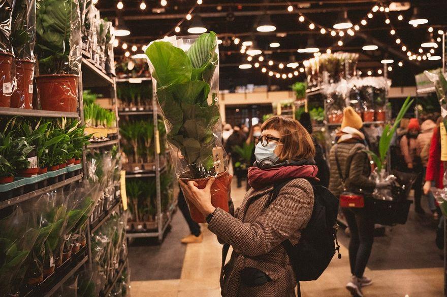 Wałbrzych: Festiwal Roślin