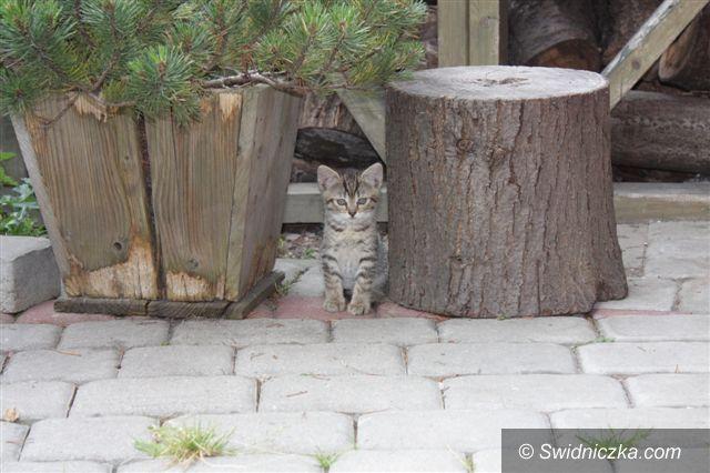 Świebodzice: Dwa kotki znalazły dom, dwa inne i ich mama czekają na nowych właścicieli