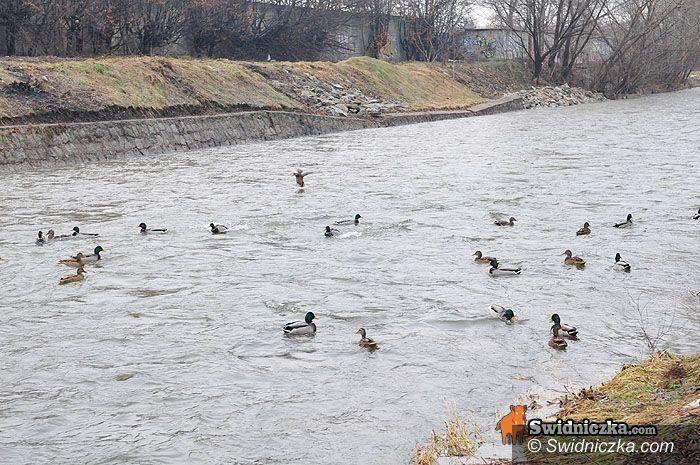 region/powiat świdnicki: Poziom wody w rzekach opadł, ale hydrolodzy znów ostrzegają