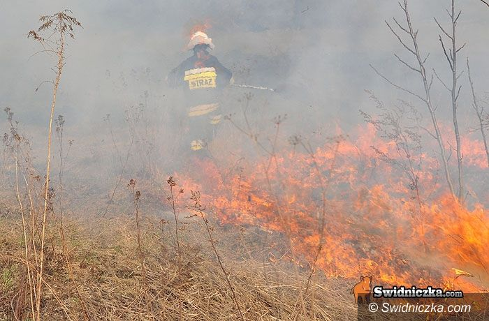 Świdnica: O krok od tragedii – przez głupotę wypalaczy traw
