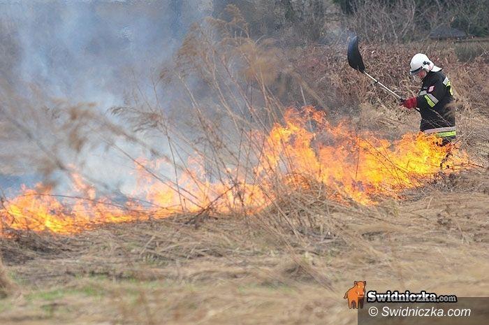 Chwałków: Plaga pożarów przy chwałkowskim lesie