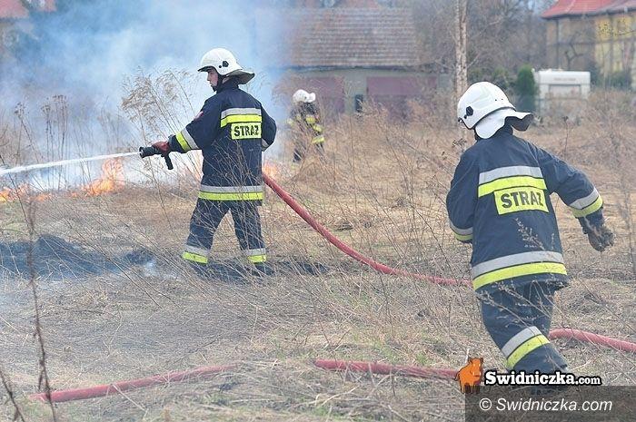 Świdnica/Dolny Śląsk: Środa w Świdnicy i w okolicy – wypadek autobusu i inne newsy