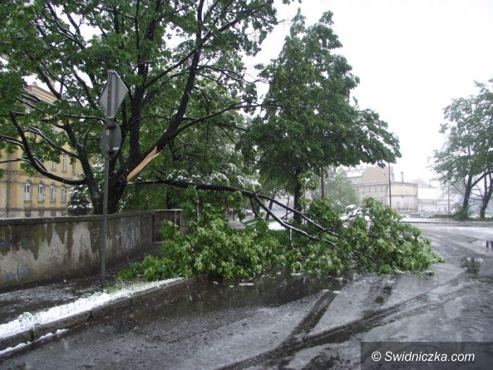 Świdnica: Drzewa się łamią jak zapałki