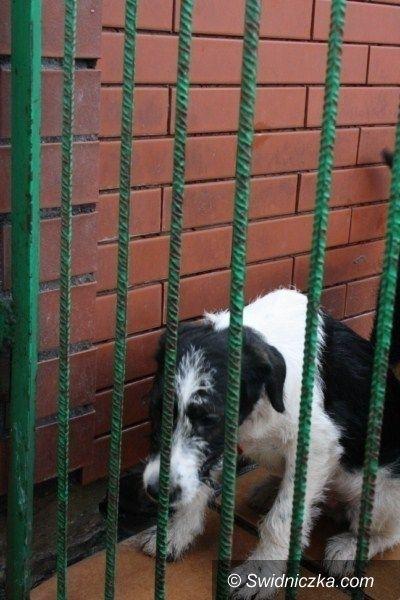 Świdnica: Zwierzęta czekają na naszą pomoc