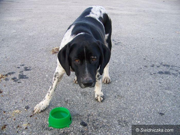 Świdnica: Pies czeka na właściciela