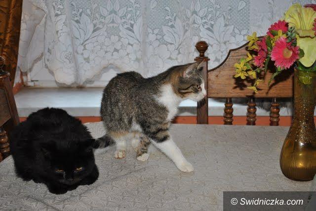 Świdnica/ Uciechów: Do adopcji cztery urocze kociaki