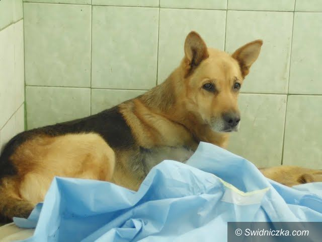 Świdnica/region: Był sobie pies