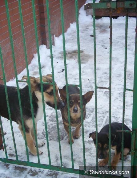 Wałbrzych: Ciężki zimowy czas dla zwierząt