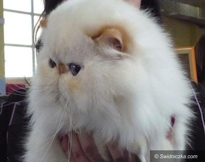 Wałbrzych: Międzynarodowa Wystawa Kotów za nami
