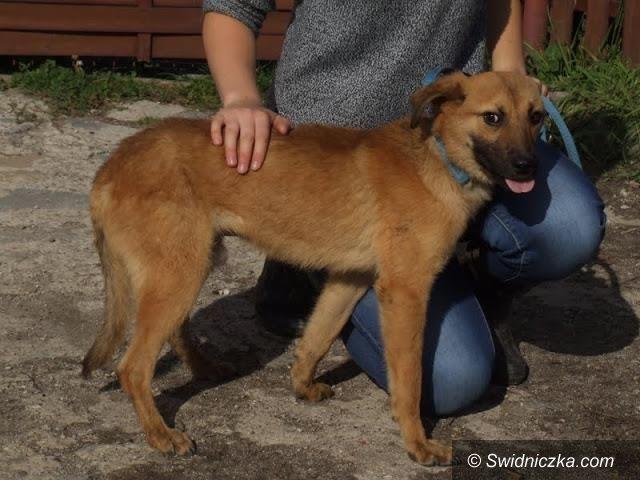 Uciechów: Grino–pies o wyglądzie szczeniaka! Pomóż mu zapomnieć o dawnym złu...