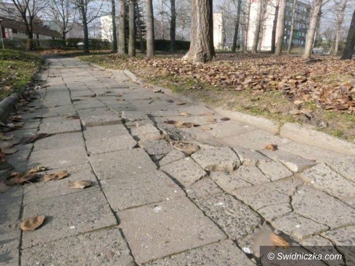 Świdnica: Rusza wycinka drzew, które zagrażają pieszym