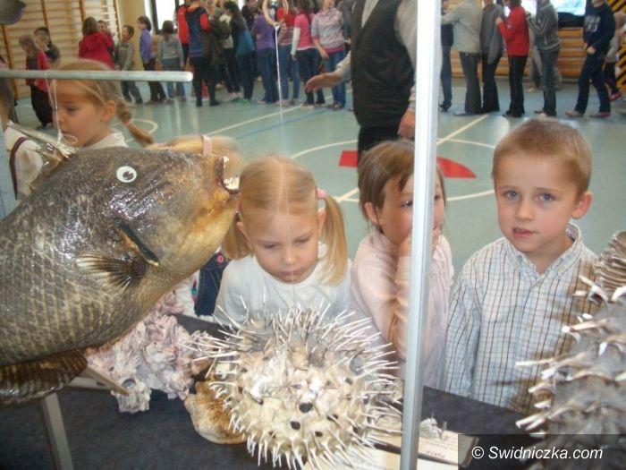 Świdnica: Niezwykłe spotkanie ze skarbami mórz i oceanów