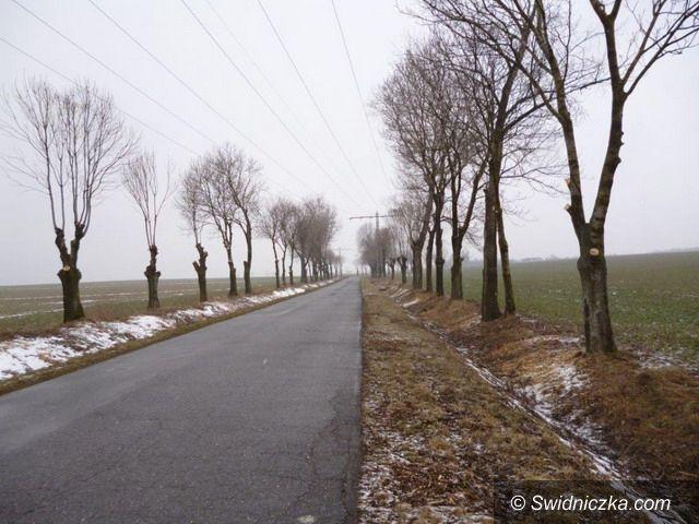 powiat świdnicki: Wycinki krzaków przy drodze powiatowej Jaroszów–Mikoszowa–Łażany