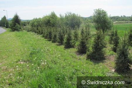 """Świdnica: """"Czas na las"""" w Świdnicy"""
