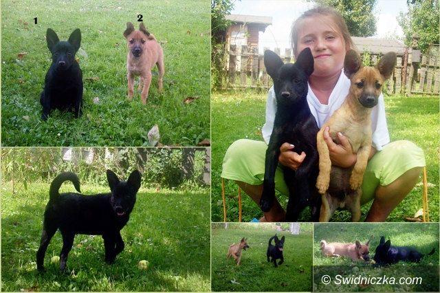Region: Poszukiwany dom dla szczeniaczków